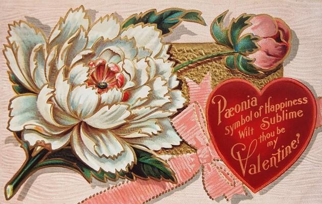 Valentin napi képeslap pünkösdi rózsával