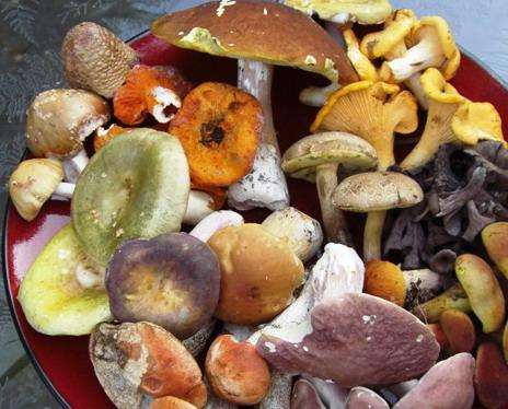 wild-mushrooms1