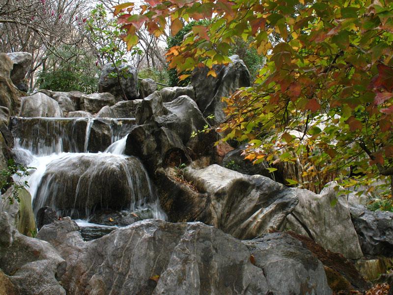 Kínai kert, Sydney; Photo: sohelrana