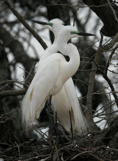 Madarak (South Luangwa National Park Zambia, Afrika) Forrás: visitzambia.co