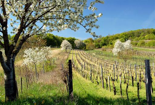 Burgenland; Forrás: ausztriaiutazas.hu