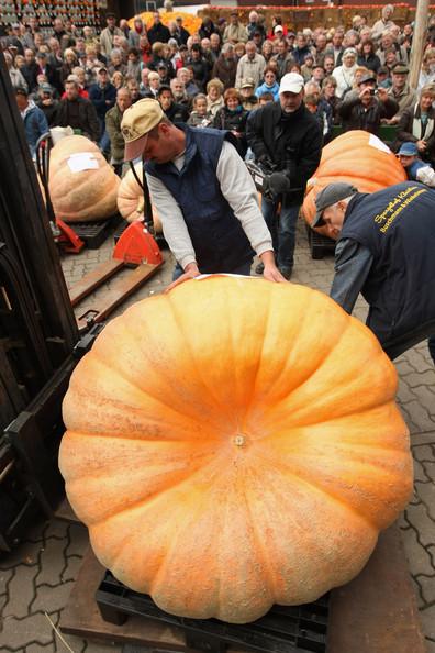 Biggest+Pumpkin+Contest+zIwuZYTnUpel