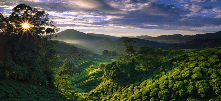 Cameron Highlands, Malázia, Forrás: abercrombiekent.co.uk
