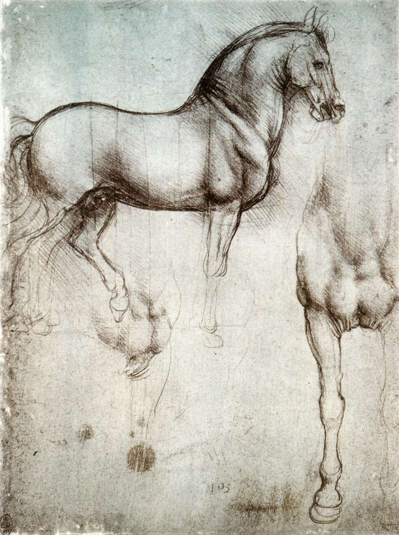 Leonardo da Vinci: Ló tanulmány