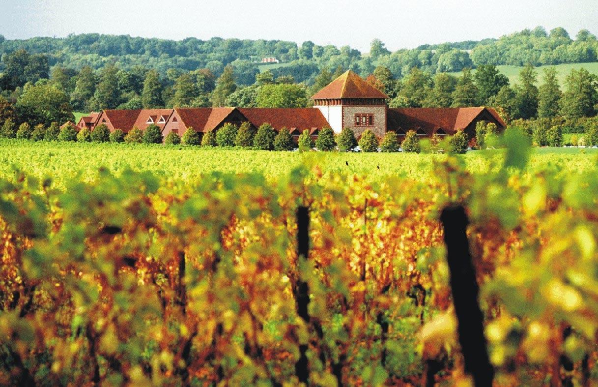 Denbies Vineyard-Winery, Forrás: curiouswines.ie