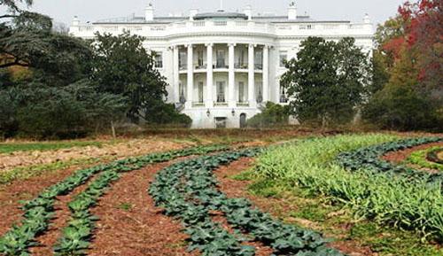A Fehér Ház konyhakertje 2009-ben, Forrás: designtopnews.com