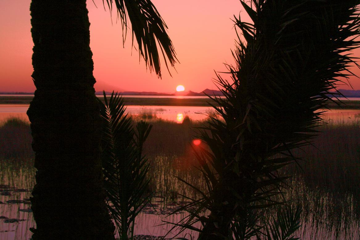 Siwa oázis, Egyiptom; Forrás: oasisorganics-siwa.com