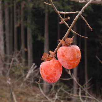 Hachiyagaki (datolyaszilva); Forrás: item.rakuten.co.jp