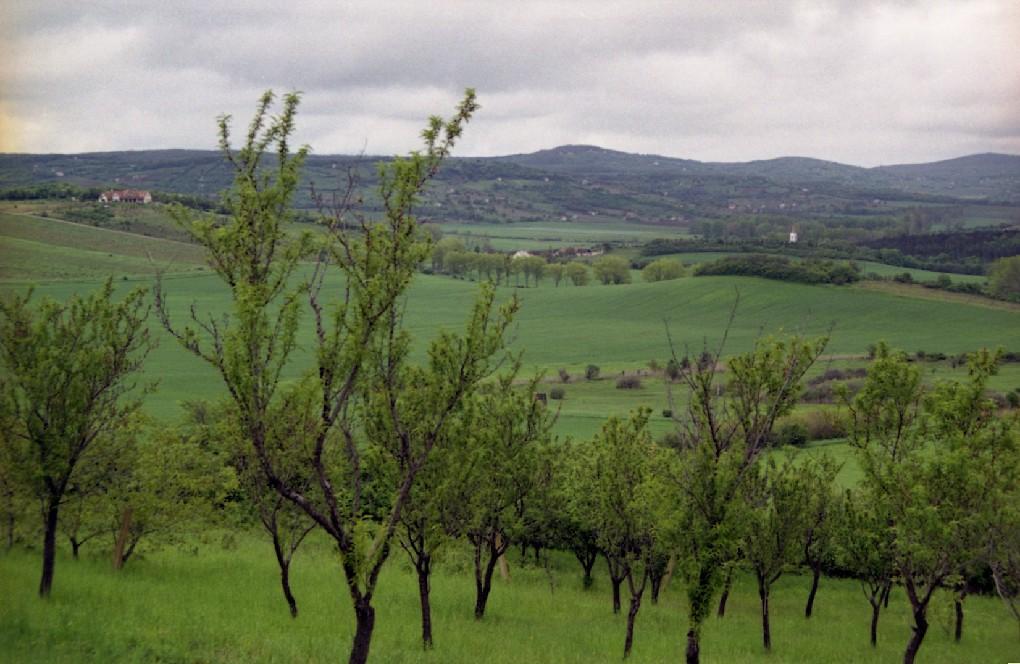 Gyümölcsös Pécsely és Vázsoly közt; Forrás: /medvegyu.organic.hu