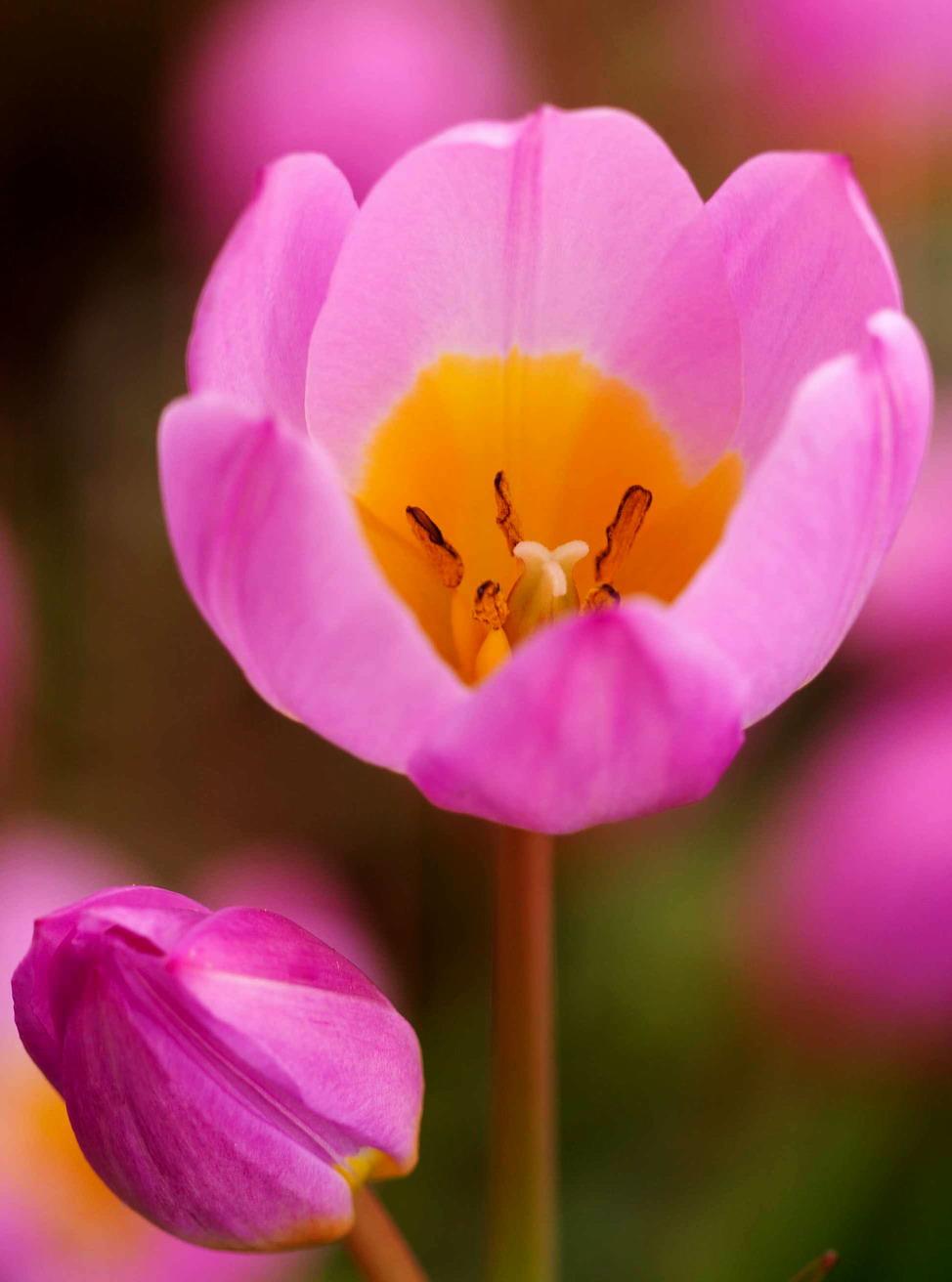 Forrás: flower-garden-bulbs.com