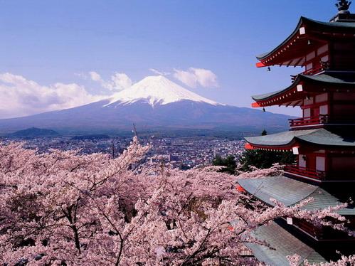 Cseresznyevirágzás, Fuji; Forrás: wallpapers.free-review.net