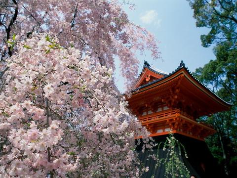 Ninnaji templom Kyoto, Japan; Forrás: wallpapers.free-review.net
