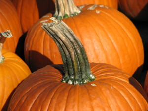 Pumpkin_stem