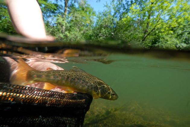 oatka-creek