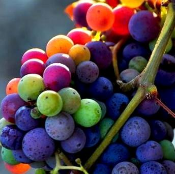 Grapes-colors