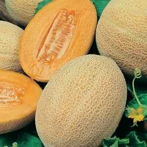 Melon-Rock-Melon-Hales-Best-Jumbo