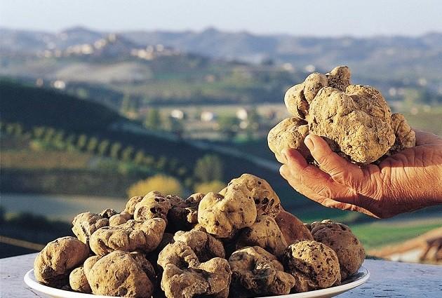 Piemonti szarvasgomba (Forrás: holidaytravel.pl)