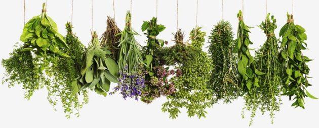 Zöldfűszerek (Forrás: whatsnewworld.info)