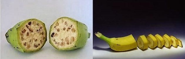 Vad és modern banán