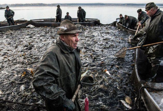 Pontyhalászat Fotó: mashable.com