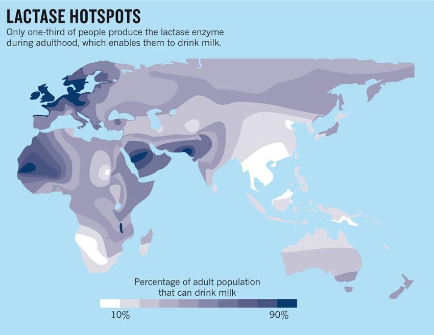 A tejet problémamentesen elfogyasztani képes felnőtt lakosság százalékban kifejezett értékeinek térképe (10-90%)
