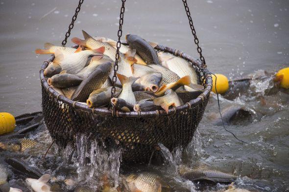 Fotó: eatglobe.com