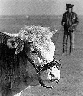 Magyar cowboy, Magyar Néprajz