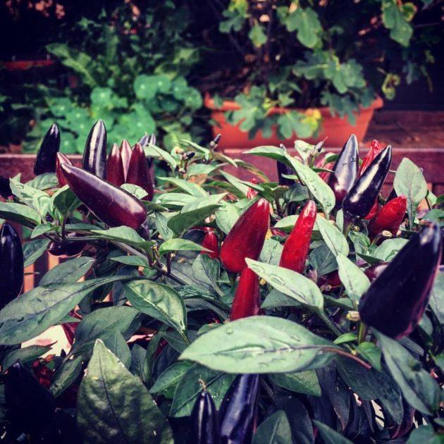 Chili a Haller-teraszon (FOOD&WINE, Budapest)