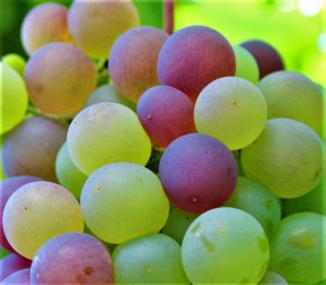 grape-1089376_960_720