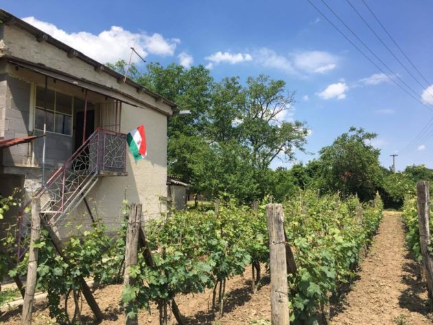 A muzslai szőlőhegy tövében