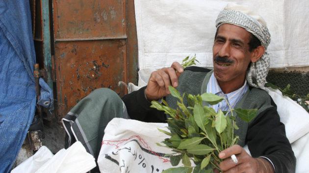 A khat cserje friss leveleit rágcsáló jemeni férfi