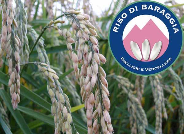 Baraggia Biellese e Vercellese DOP rizs