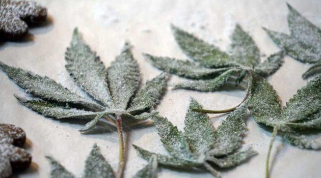 Kandírozott marihuána levél