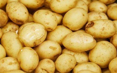 KONYHAI MÍTOSZOK – a sózás és a sószippantó krumpli