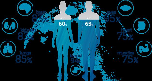 A víz a szervezeten belül, a szerveinkben is eltérő arányban van jelen.