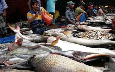 HALHOZ VÖRÖSBOR – a hal és borpárosítás elmélete és gyakorlata