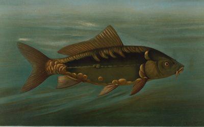 HALÁSZLÉ EVOLÚCIÓ – amit a magyar halászlevekről tudni érdemes