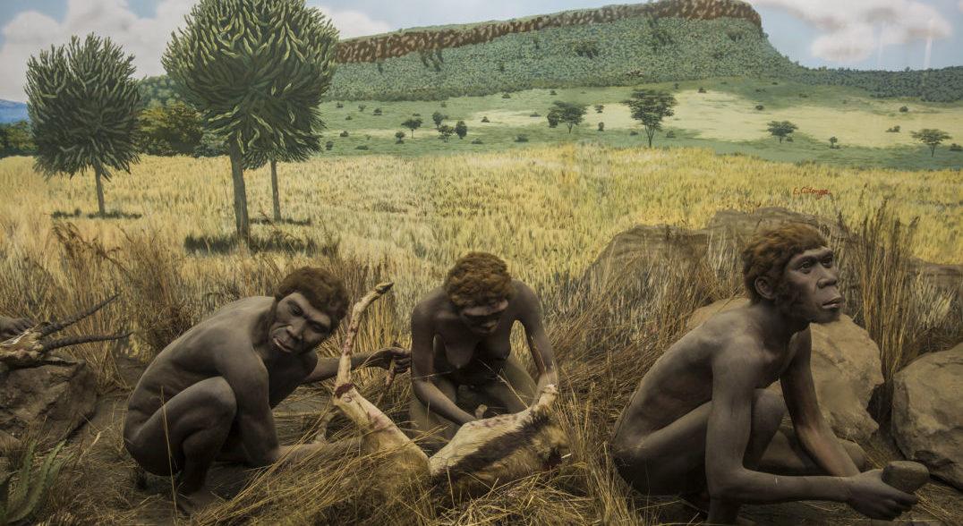 Eszközhasználó Homo habilis horda