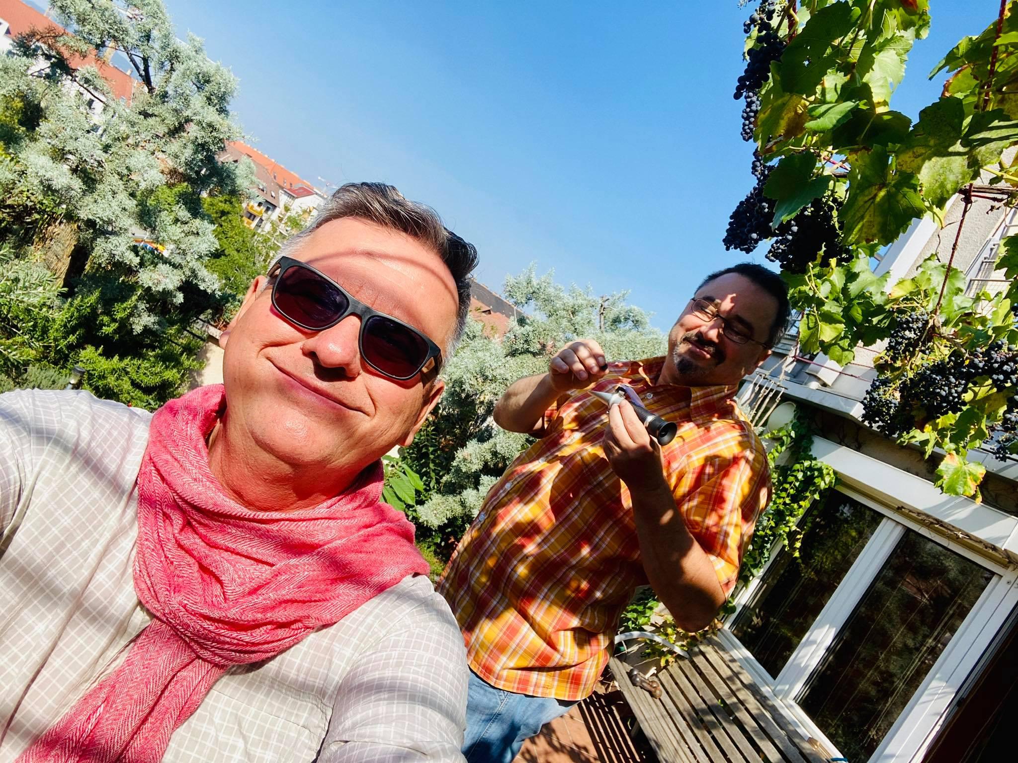 Csíki Sándor szőlősgazda és Lesti Zoltán borász a szőlő érettségét ellenőrzi. Helyszín. Haller-terasz. Fajta: kékfrankos. Terroir: 5. emeleti terasz speciális pesti mikroklímával.